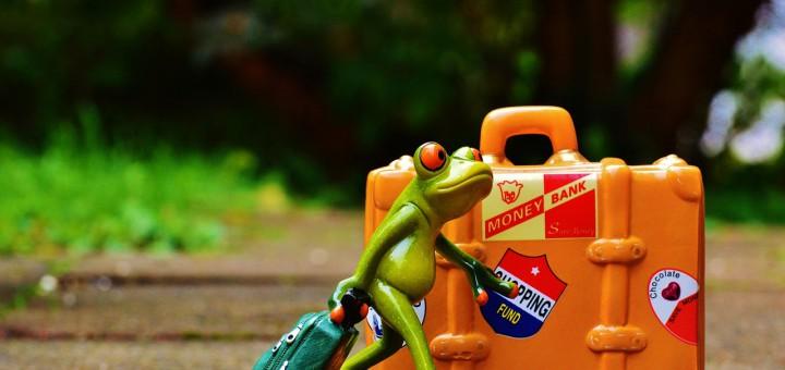 frog-991304_1280